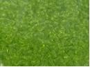 Lime Green - Translucent